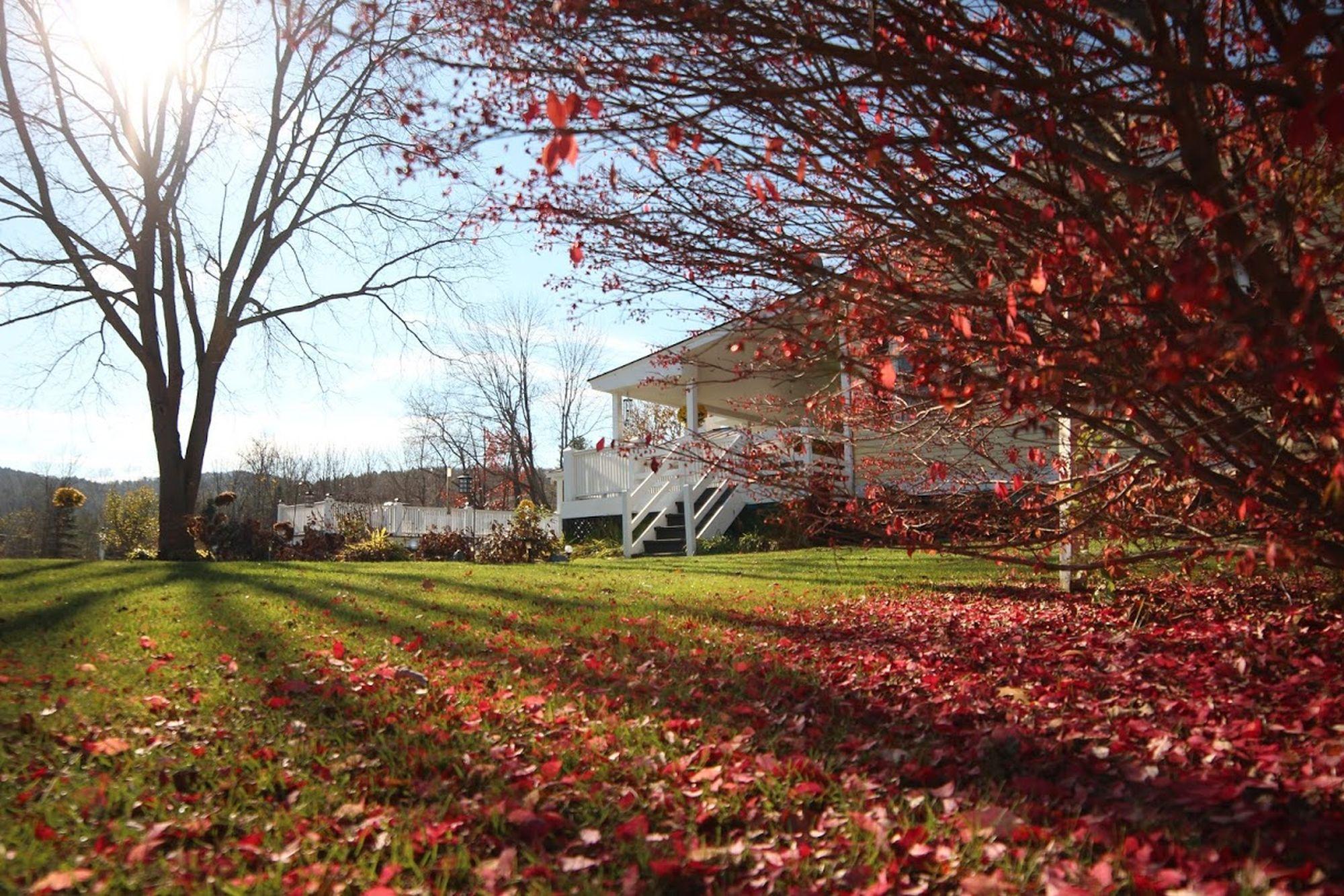 Backyard Late Fall